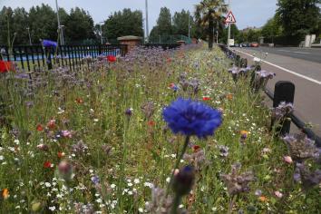 Bloomin' marvellous!